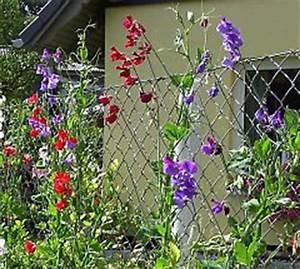 Immergrüne Kletterpflanze Für Zaun : ranknetze aus drahtseil oder kunststoff ~ Michelbontemps.com Haus und Dekorationen