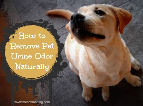 How To Remove Pet Urine Odor Naturally  Carpets, Tops And