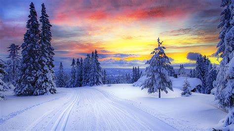norway winter forest snow trees  wallpaperscom