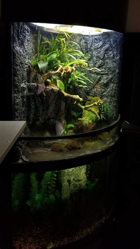 scaping  paludarium  plants  diy vivarium guide