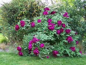 Arbustes Décoratifs à Fleurs : les petits arbustes fleurs et jardins de rhuys ~ Premium-room.com Idées de Décoration