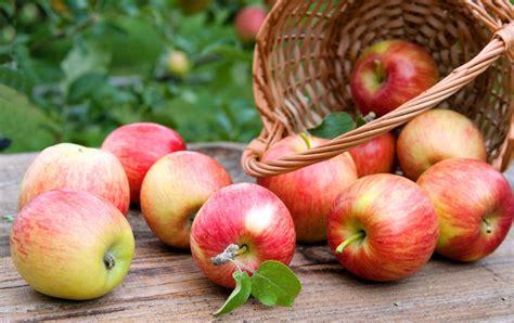 cuisiner des pommes comment cuisiner la pomme sans tracas magazine féminin