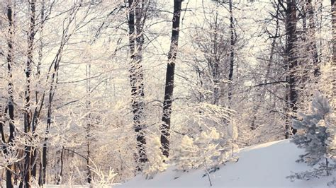 Winter landscape Snowy winter in forest Panorama on