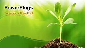 Powerpoint Template  Young Green Plant Growing In Sunshine
