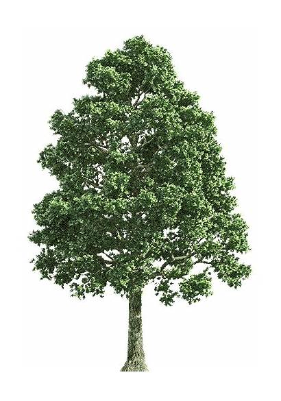 Tree Sticker Background Rigling Josh Giphy Everything