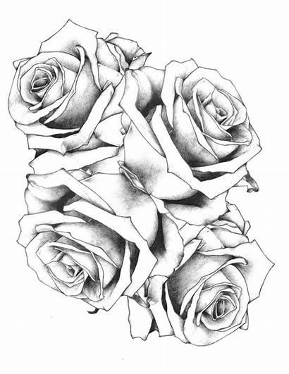 Rose Designs Tattoos Tattoo Printable Magazine Roses