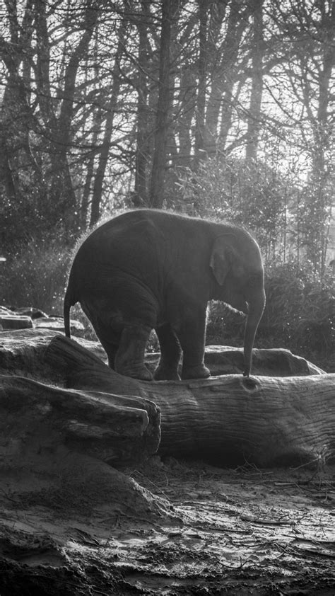 Wallpaper Elephant, forest, sunlight, Animals #5372 - Page 3
