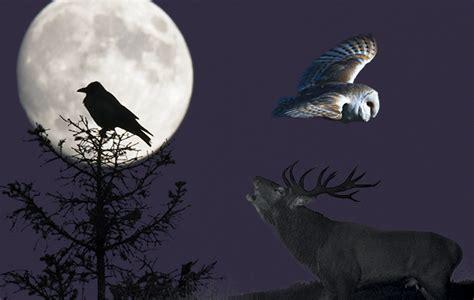 animals   hear  night