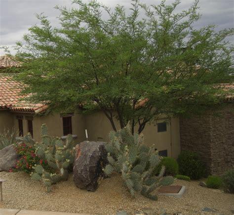 Time  Prune  Arizona Landscaping Plants