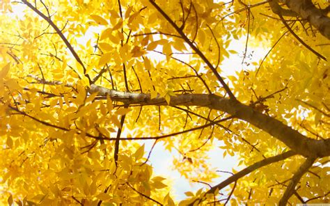 Yellow Picture by Yellow 4k Hd Desktop Wallpaper For Wide Ultra