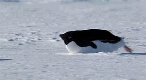 Penguin Moving GIF - Find & Share on GIPHY