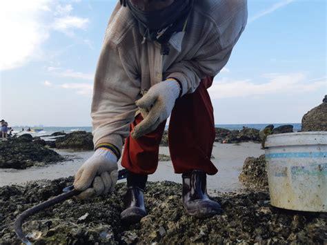 ตื่นตา!!โขดหินหลายร้อยก้อนโผล่ ทั้งหอยแมลงภู่ หอยนางรม นทท ...