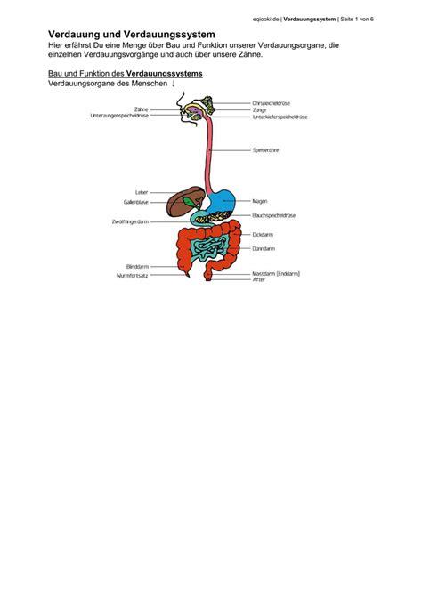 Funktion des verdauungssystems