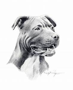 American Pit Bull Terrier Dog Signed Art Print by Artist DJ