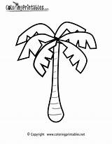 Palm Coloring Tree Printable Pages Leaf Colouring Nature Template Rainforest Sheet Drawing Jungle Easy Tropical Trees Getdrawings Pixels Pumpkin Plant sketch template