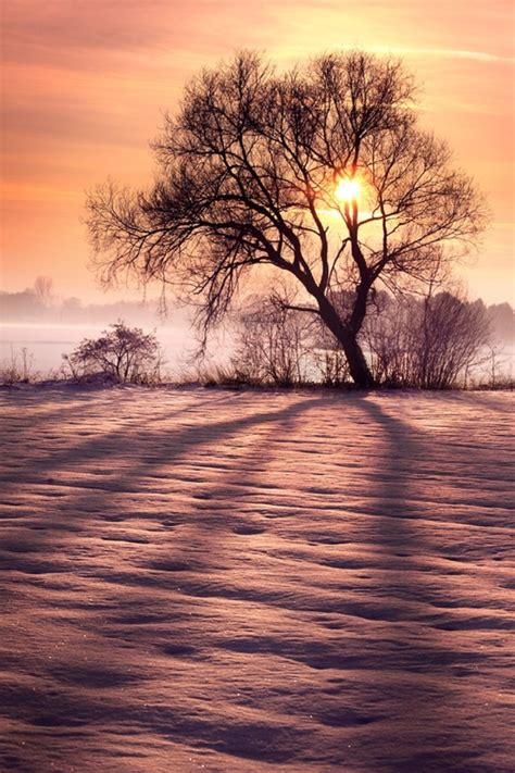 Top Winter Picture by Top 10 Most Astonishing Winter Photos Top Inspired