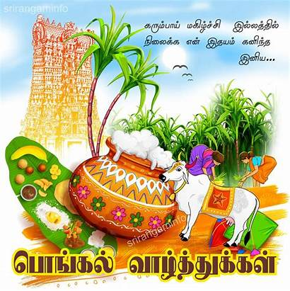 Pongal Happy Greetings Tamil Cow Village Wishes