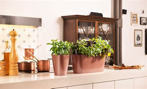 Schöne Pflanzen Für Die Wohnung by Gr 252 Ne Ideen F 252 R Die Wohnung