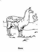Llama Coloring Animals Planet Earth Awesome sketch template