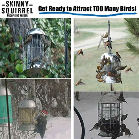 bird feeder squirrel proof cage repellent for outside