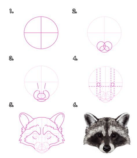 draw animals red pandas  raccoons tuts