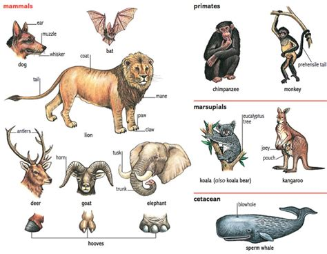 elephant noun Definition pictures pronunciation and