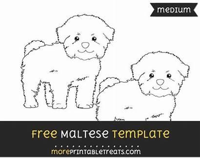 Maltese Template Multiple Sizes Templates Them
