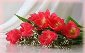kwiaty tulipany grafika