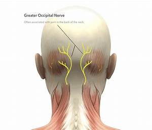 35 Occipital Nerves Diagram