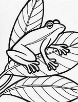 hd wallpapers amphibian coloring pages