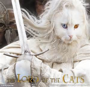 lord of the cats lord of the cats pictures