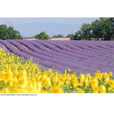 40 best 1 Love Redesigned - French Countryside images on