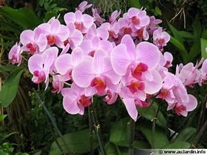 17 meilleures idees a propos de plante d39interieur sur With comment realiser un jardin zen 4 17 meilleures idees 224 propos de jardins zen sur pinterest