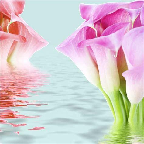 gambar bunga hd gambar bunga  wallpaper hp gudang