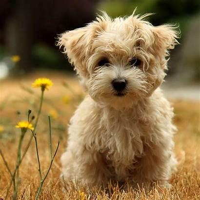 Puppy Puppies Wallpapers Desktop Animals Zoo