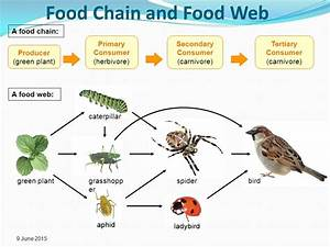 Energy Flow Food Chains and Webs Carbon Cycle - ppt video ...