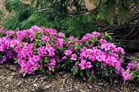 full shade shrubs Great Plants for Shade Gardens | HGTV