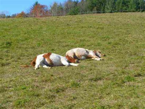 horses sleeping weekend activities sleep leisurely breakfast enjoy morning bed