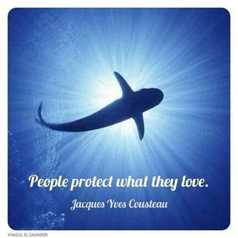 images  jacques cousteau  pinterest tony