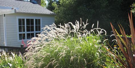 Plants for Landscaping   Landscaping Network