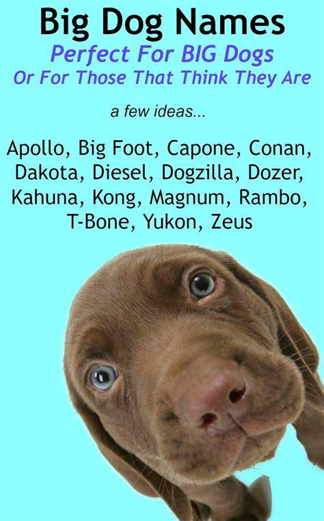 big dog names perfect   large breed female  male
