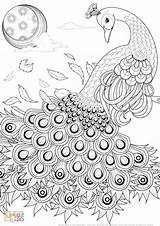 Peacock Coloring Pages Most Simple Colored Very Pretty Complex Guide sketch template