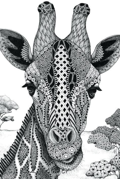 giraffe face drawing  paintingvalleycom explore