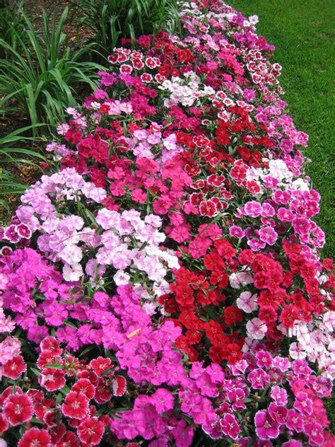 flowers that flower all year flower shrub tree installation weisz selection lawn
