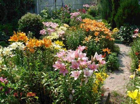 lilies beautiful flowering plants   stress garden design