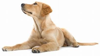 Dog Happy Dogs Resources Walking Pet Sitting