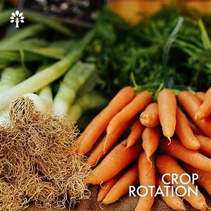 January Is A Good Time To Start Thinking About Crop
