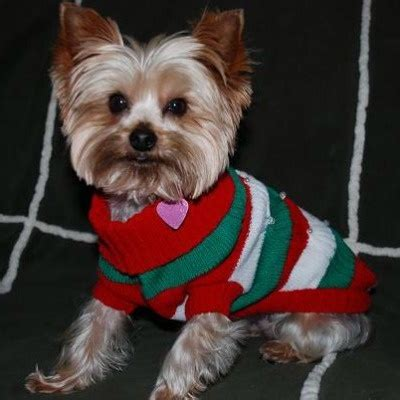 134 best Hipster Christmas Sweaters images on Pinterest   Pets Dog clothing and Dog sweaters