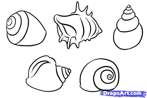 How to Draw Shells Easy