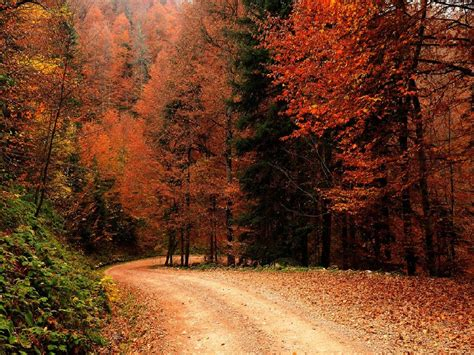 Free Animated Autumn Wallpaper - autumn nature wallpaper wallpapersafari